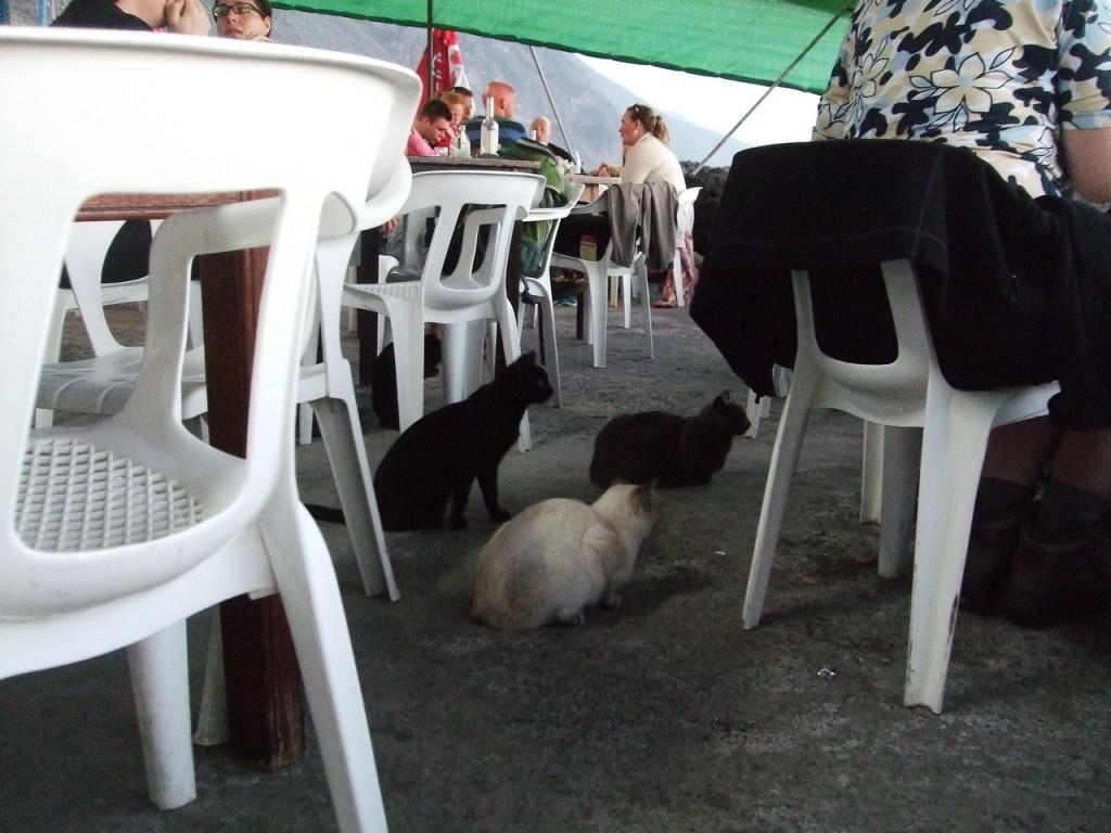 Кошки в рыбном ресторане ждут своей доли улова